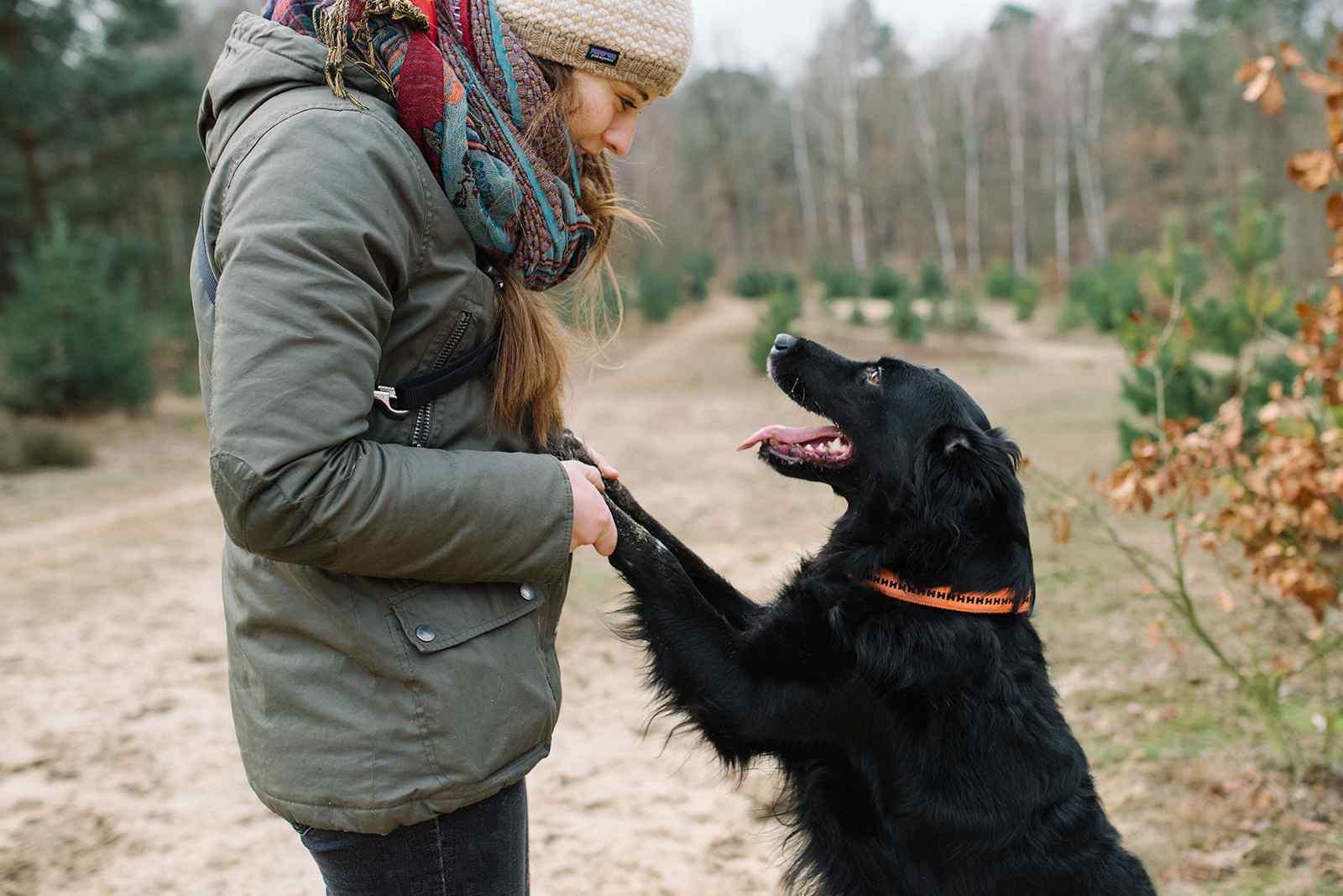 Hund macht Männchen, Frau hält dessen Pfoten in der Hand