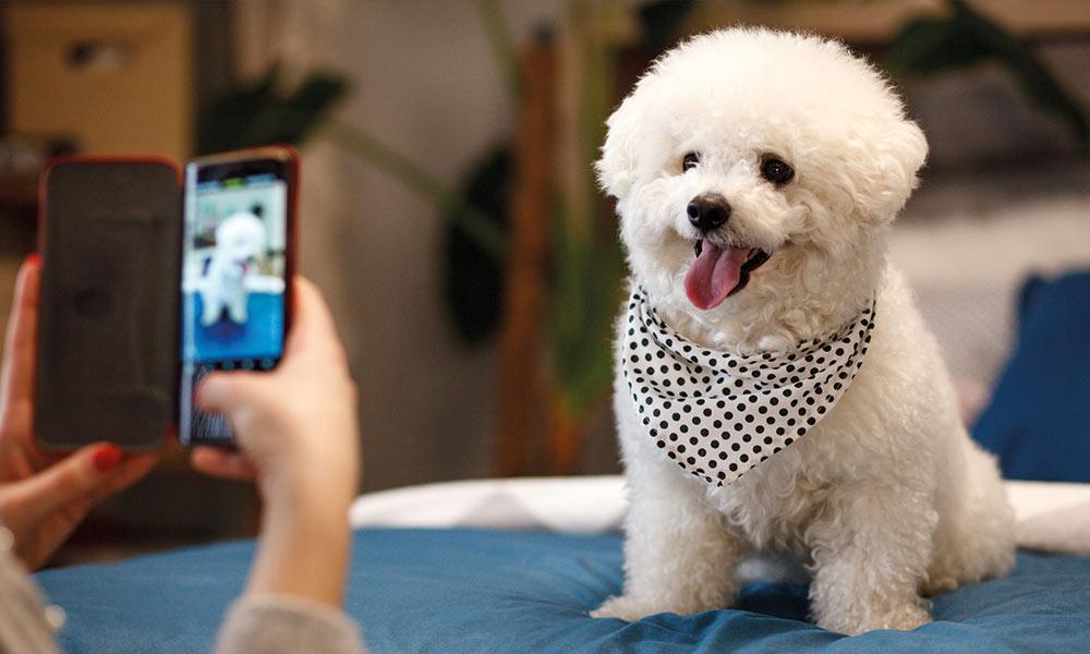 Ein Hund wird mit einem Handy fotografiert.