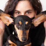 Frau im Hintergrund, Hund im Vordergrund, Frau hält die Ohren des Hundes fest